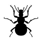 Insect silhouette. Sticker ground beetle bug. Carabidae coleoptera. Vector Stock Photography