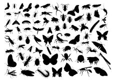 Insect silhouettes Royalty Free Stock Image