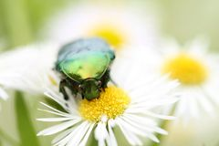 Insect Royalty Free Stock Photography
