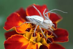 Insect sitting on a flower macro. Nature stock images