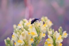 Insect sitting on a flower meadow . Stock Photos