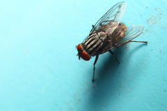 Insect small animal Royalty Free Stock Photo