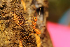 Insect small animal Royalty Free Stock Photography