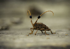 Insect. Royalty Free Stock Photography