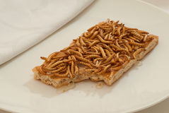 Insect Snack Stock Photography