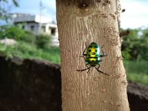Insect with sparkling colours Royalty Free Stock Photos