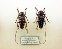 Free Insect Specimen Stock Photos - 121273413