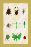 Insect specimens Frame Stock Image