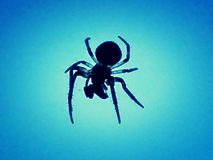 Insect spider. Men Stock Images