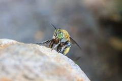 Insect on stone Stock Photography
