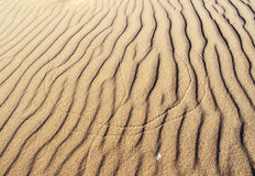 Insect traces on the sand Stock Image