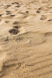 Insect Tracks in the Sand. Little Insect Tracks in the Sand with vertical composition Stock Image