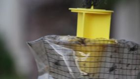 Insect trap stock footage