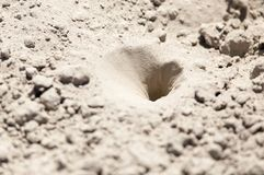 Insect traps in the sand. In the park in nature Stock Photos