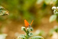 Colorful butterfly laid on top of flower. An insect with two pairs of large wings that are covered with tiny scales, usually brightly colored, and typically royalty free stock photography