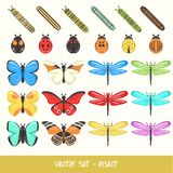 Insect Vector Set Stock Image