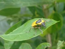 Insect& x27; vita di s Fotografia Stock
