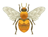 Insect royalty free illustration