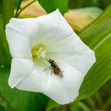 Insect on white flower Stock Photo