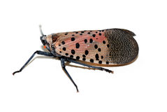 The insect that will fly Royalty Free Stock Photos