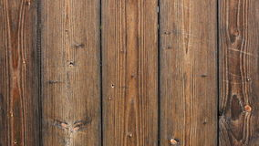 Insect on wooden fence. Closeup of small insect on wooden fence stock footage