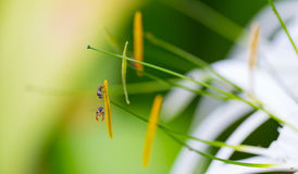 Insect. The world of insects, small animals Royalty Free Stock Image