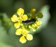 Insect on yellow flower in nature. macro.  Royalty Free Stock Photography