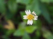Insecte été perché sur la fleur non désirée Images stock