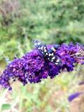 insecte photos stock