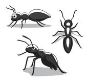 Insecte Ant Cartoon Vector Illustration Image libre de droits