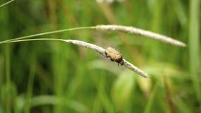 Insecte arctique Images libres de droits