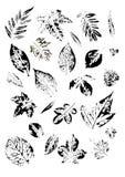 Insecte avec des copies des feuilles de divers arbres illustration de vecteur