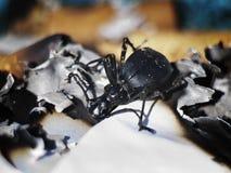 Insecte brûlant Images libres de droits