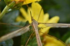 Insecte caché Photographie stock libre de droits