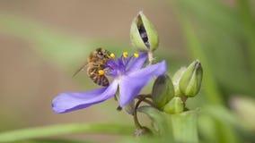 Insecte d'abeille Photo libre de droits