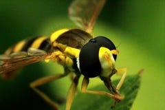 Insecte d'abeille photographie stock
