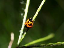 Insecte d'anomalie images libres de droits