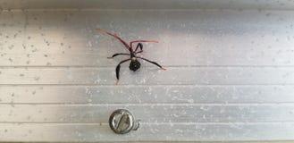 Insecte d'assassin photographie stock libre de droits