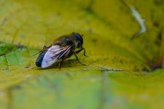 Insecte d'automne se reposant sur une feuille jaune Photos libres de droits