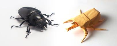Insecte d'origami se reposant près du vrai insecte Image libre de droits