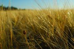 Insecte dans le domaine de texture Photos stock