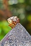 Insecte dans le jardin image libre de droits