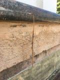 Insecte de bâton photo libre de droits