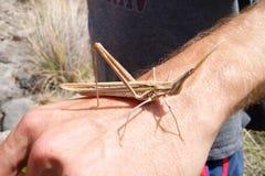 Insecte de bâton amical Photo libre de droits