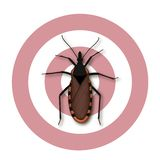 Insecte de baisers, Chagas Disease illustration de vecteur