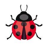 Insecte de coccinelle Illustration de vecteur de couleur Photo libre de droits