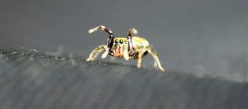 Insecte de couleur image libre de droits