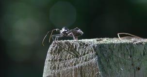 Insecte de courge rampant sur le poteau en bois banque de vidéos