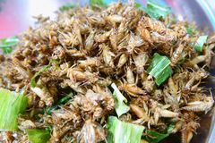 Insecte de cricket frit, nourriture populaire de rue de casse-croûte en Thaïlande images libres de droits
