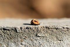 Insecte de feuille photos libres de droits